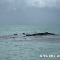 Tips Liburan Murah Ke Pulau Derawan