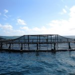 Do Now U! Do the Benefits of Aquaculture Outweigh Its Negative Impacts?