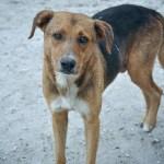 Do Now U! Do No-Kill Shelters Really Benefit Animals?