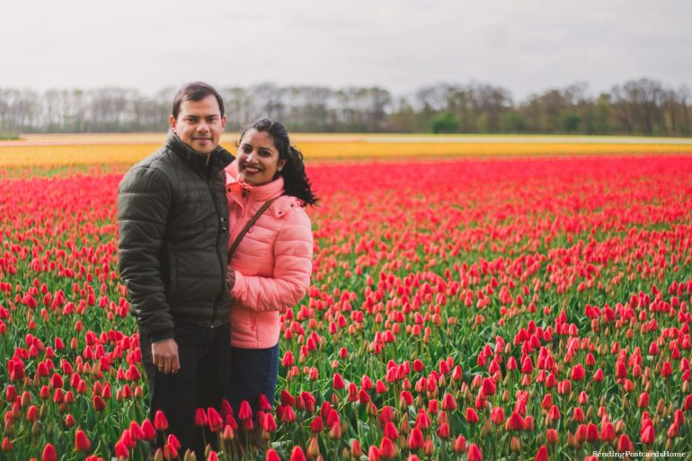 Exploring the tulip fields in Amsterdam, Netherland 10