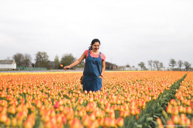 Exploring the tulip fields in Amsterdam, Netherland 11