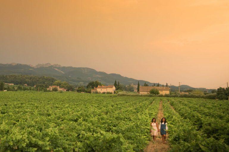 Sablet - Vineyards, Provence 1