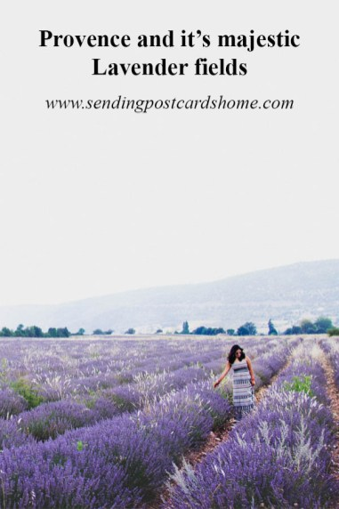 Provence and it's majestic Lavender fields - P1