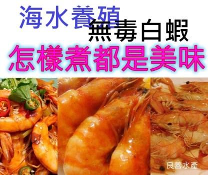 良善水產超大白蝦海水無毒養殖