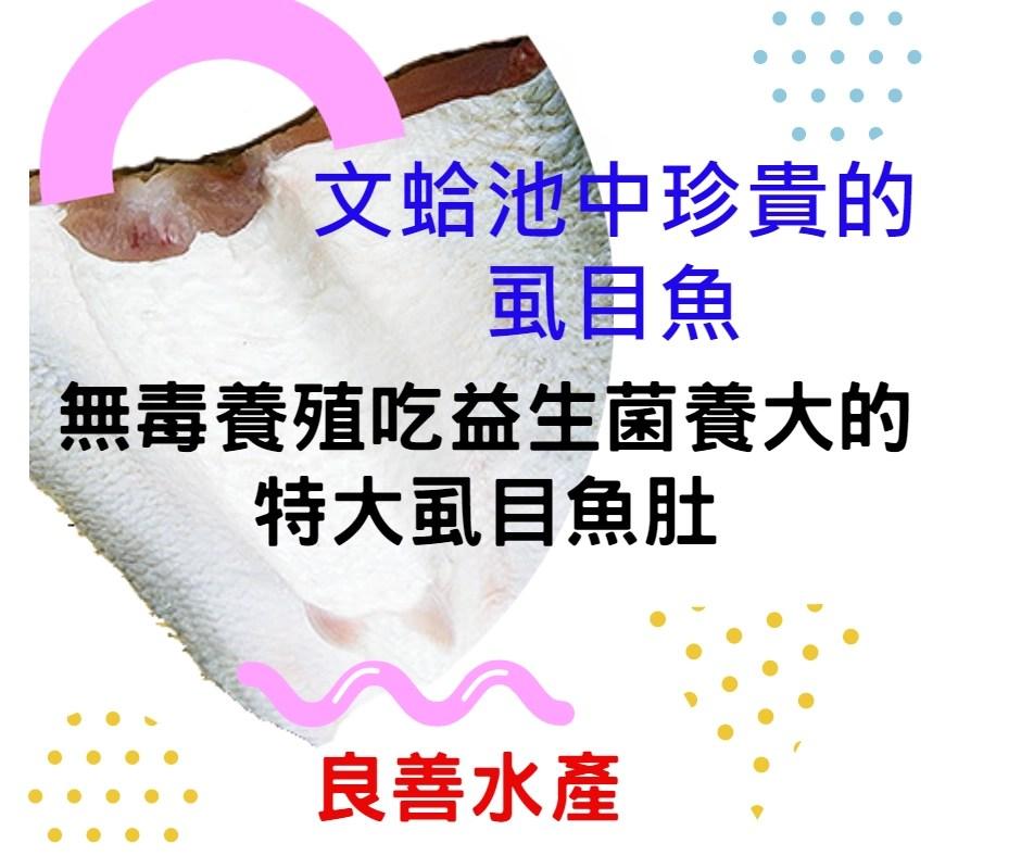 虱目魚肚-無毒養殖吃益生菌長大的虱目魚-良善水產