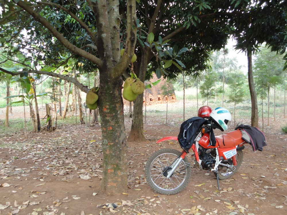 Pizza, motorbike rides to communities and LivingStone lecture (written on 1 February 2014) (2/6)