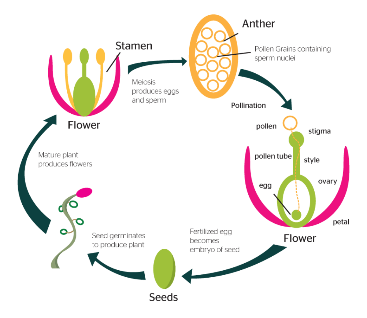 How Are Plants Propagated Ecosystems United