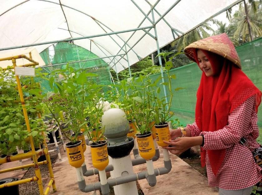 Taman Wisata Mekarsari Bogor