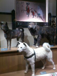 国威発揚の役割を担った犬たち(科学博物館)