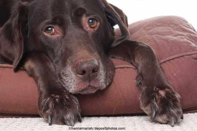 Hat Ihr alter Hund noch Lebensqualität?
