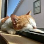 不眠症対策!ぐっすり眠れる自律神経を整える入浴と睡眠法