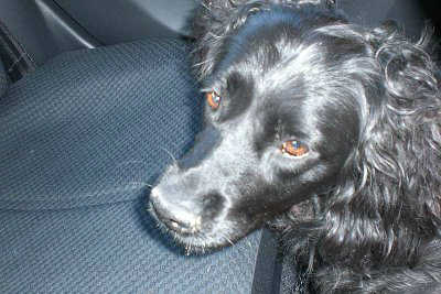 Common dog ailments like Arthritis are highly treatable.