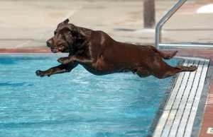 One exercise that's great for dogs is swimming.
