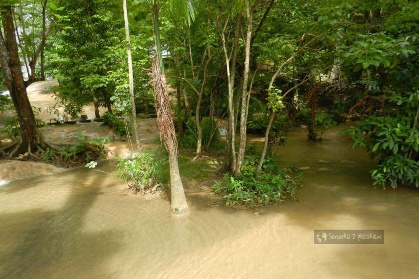 Dżungla w wodzie
