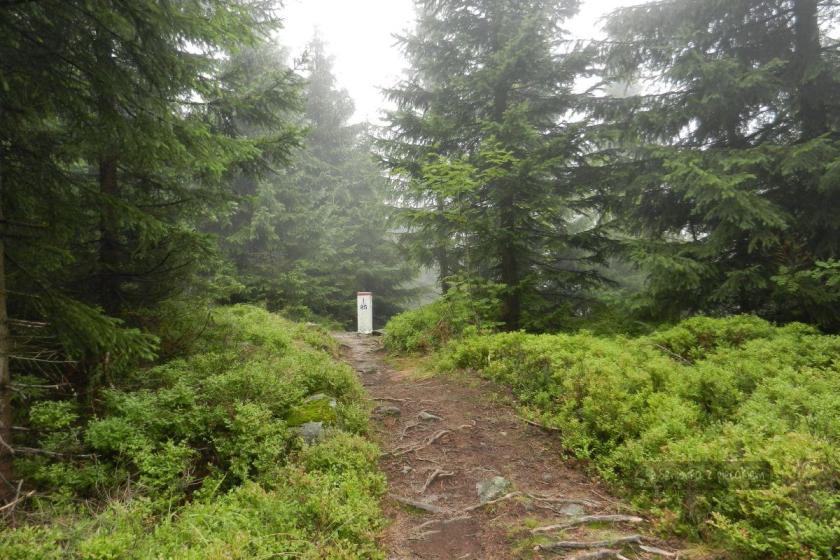 szlak w Beskidzie Śląskim