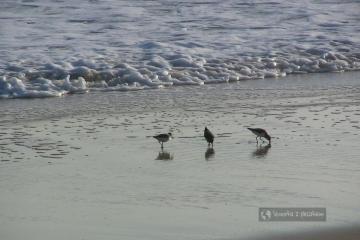 Ptaki na plaży