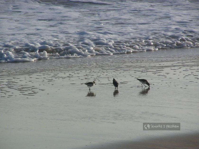Plaża w Quarteira