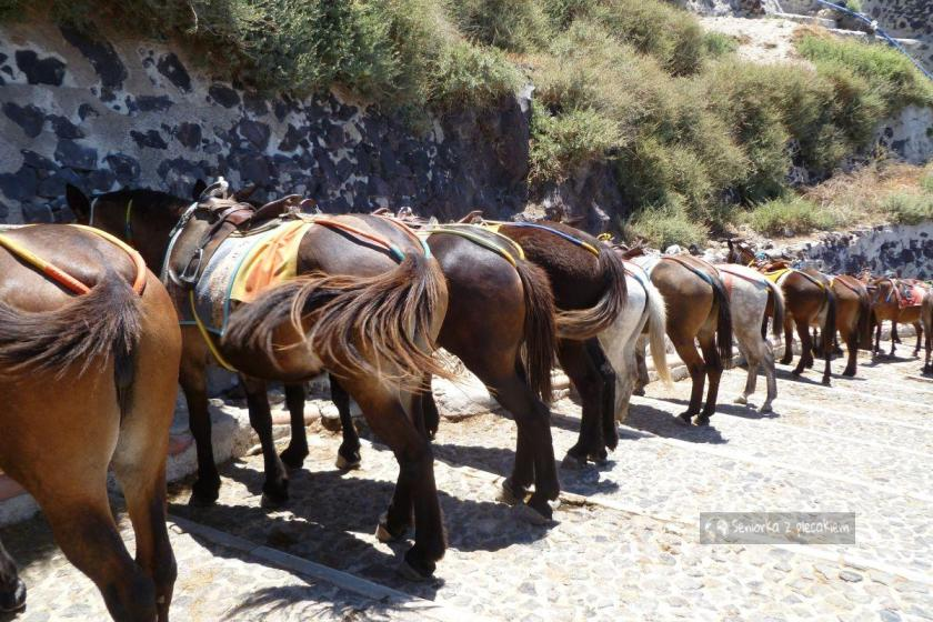 Parking osłów i mułów na Santorini