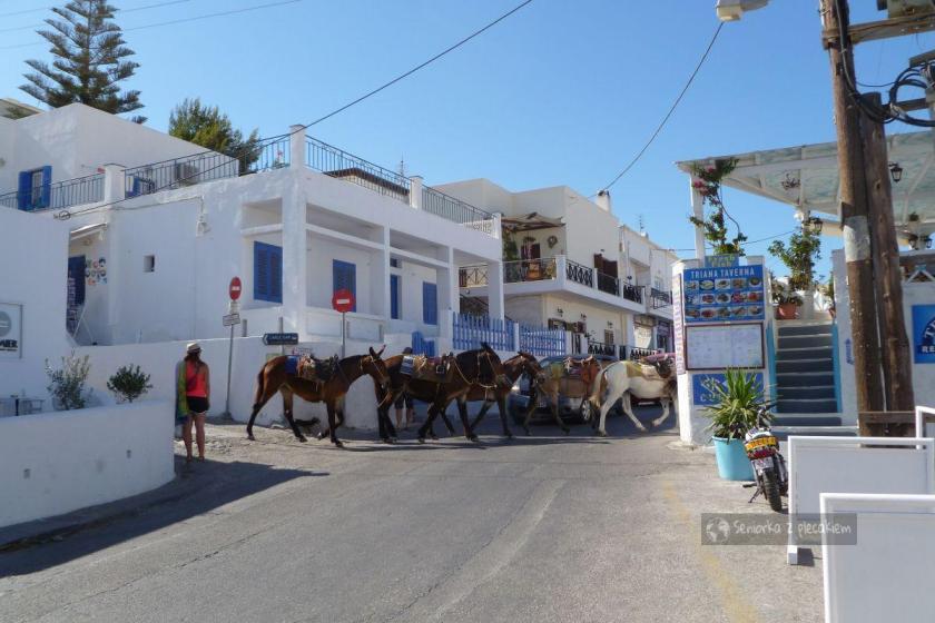 Muły na Santorini