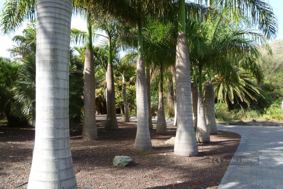 Ogród Botaniczny na Gran Canarii