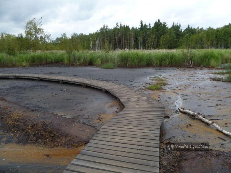 Bulgoczące źródła w rezerwacie SOOS