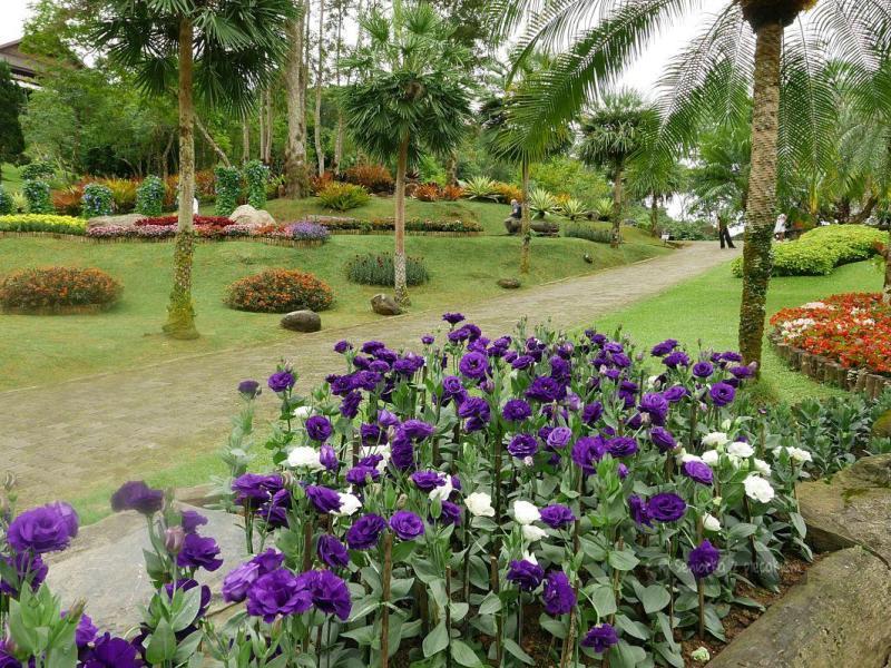 Plantacja herbaty i ogród botaniczny