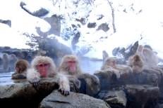 singes au bain
