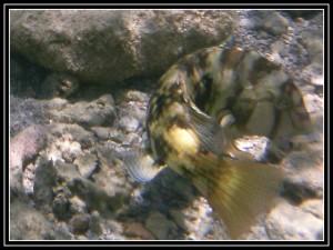 petits poissons