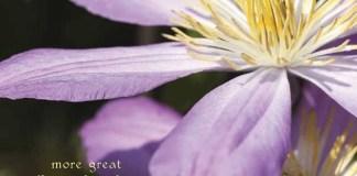 Seniors Lifestyle Magazine Talks To An Abundance Of Flowers