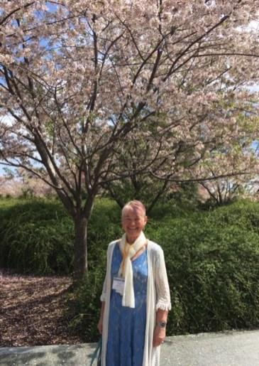 Cherry Blossoms in Washington, DC