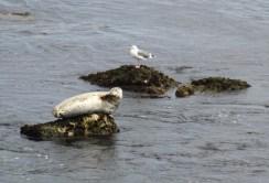 Monterey Bay (3)