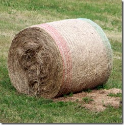baled hay cylinders 8-1-2015 5-53-55 AM 2593x2601