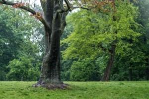 tree, plant, leaves