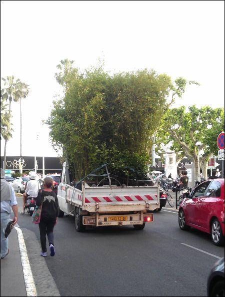 Da fährt einer sein Bambuswäldchen spazieren. In Cannes kann man das. ©sennhauser