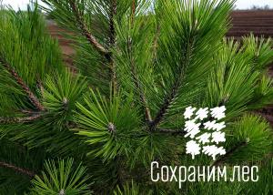 В этом году в рамках акции «Сохраним лес» высажено 40 млн деревьев