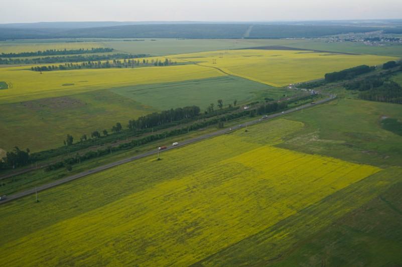 Иркутские сельхозпредприятия расширили ассортимент масличных культур