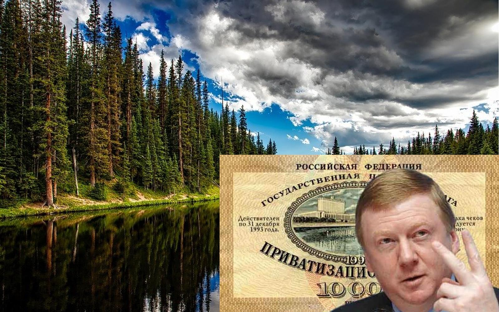 Что скрывается за коммерческими инициативами по «лесовосстановлению» и приватизацией леса?