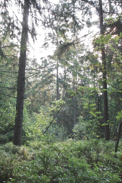 Nature Bavière