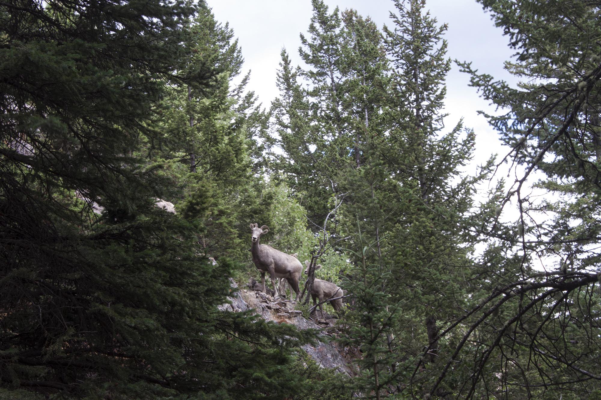 Rocheuses, canada, banff