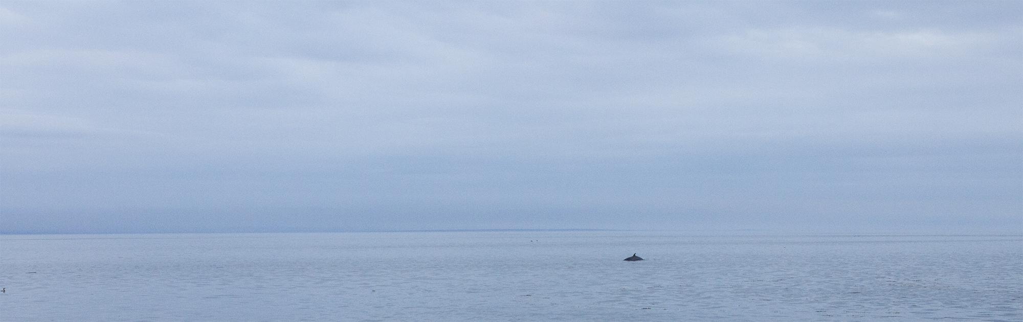 baleines québec