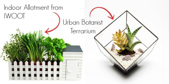An Indoor Allotment And An Urban Botanist Terrarium