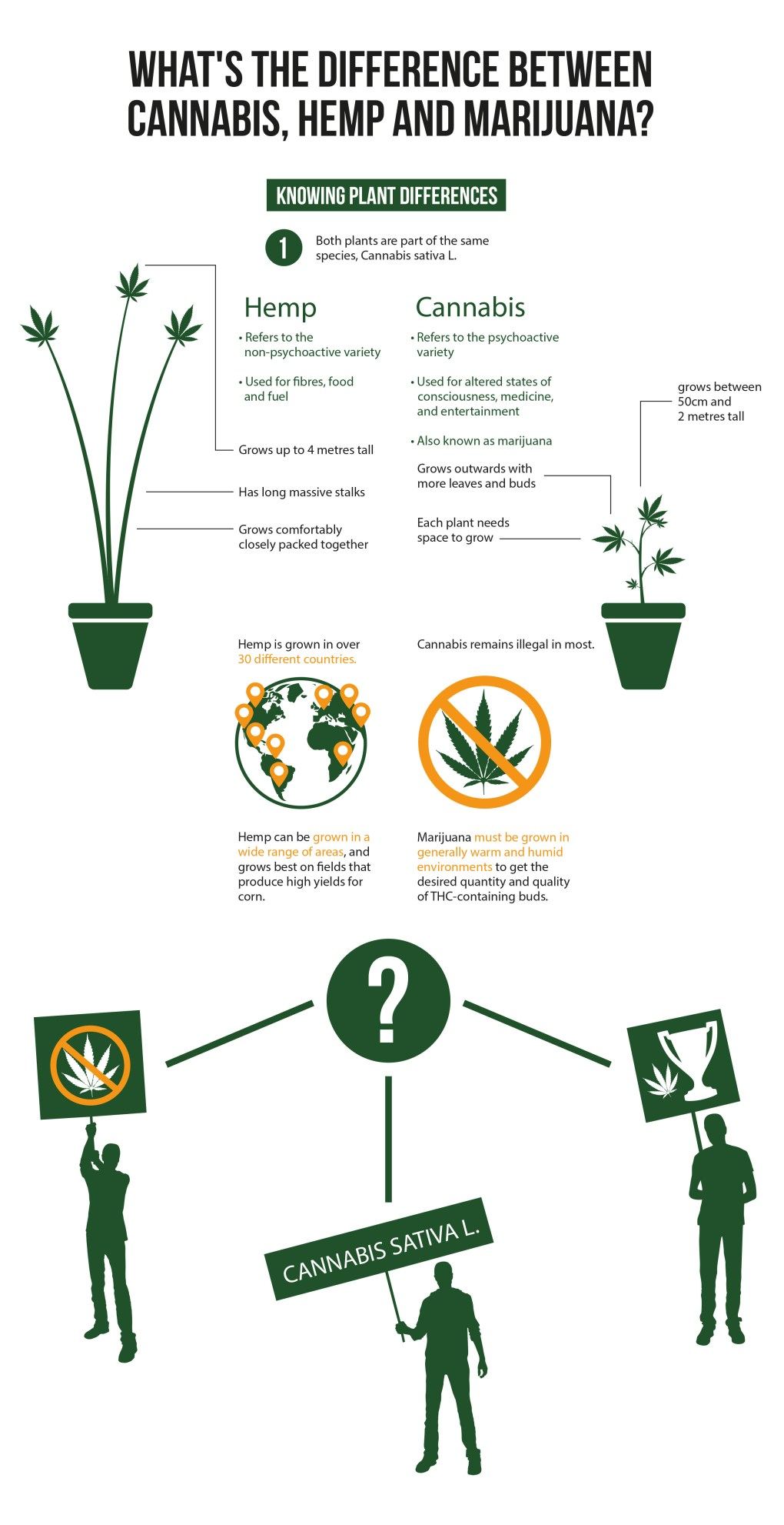 "An infographic explaining the differences between Cannabis, Hemp, and Marijuana. A simple illustration in solid green shows a potted hemp plant on the far left. A list of bullet points as well as coordinating lines break down the characteristics of a hemp plant. To the right is a small illustrated, inn solid green, potted cannabis plant. This too has a list of information explaining the plant. In the centre of the infographic is an image of a globe with orange map indicators showing the different countries hemp is grown in. To the right of the globe is an icon of a cannabis leaf with an orange circle and a slash through it. Above is written that ""Cannabis remains illegal in most"". At the bottom of the image a question mark is written with negative white space in a green circle. From the question mark are three lines pointing to the bottom left, bottom middle, and bottom right. Three silhouette figures are represented holding different signs: an anti cannabis poster, a cannabis sativa L. sign, and a cannabis leaf beside a trophy sign."