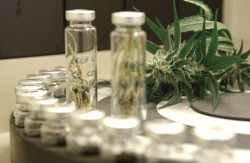 GW Pharmaceuticals' Sativex is the world's first market-approved whole-plant extract