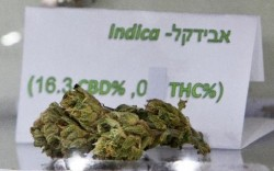 3 - High-CBD, low-THC strains such as the Israeli Avidekel are now being developed for medical use
