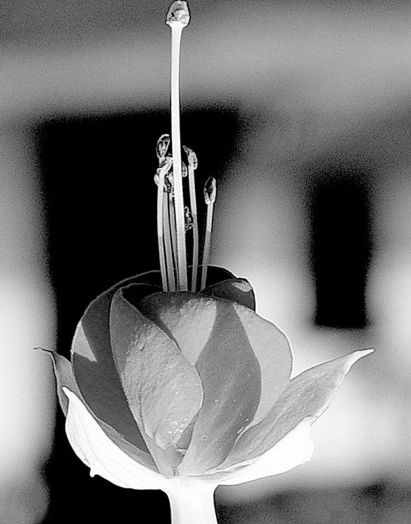 preto-e-branco