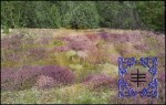 ogham heather