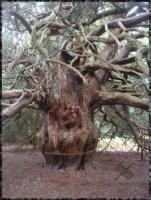 Druid Alphabet
