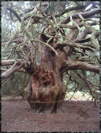 Ogham Alphabet yew tree