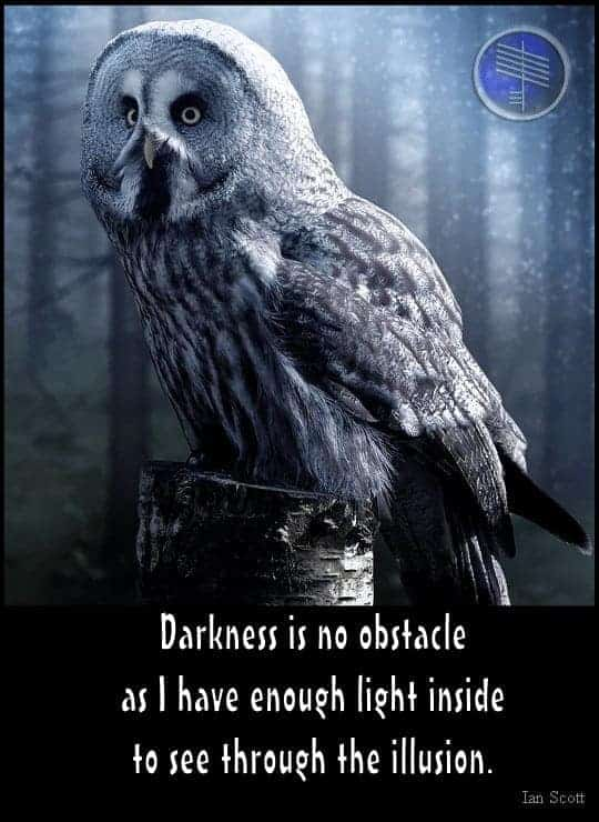 Owl Totem Meaning