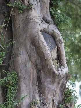 spiritual meaning of trees